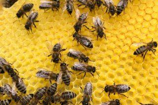 Jaufentalerhof Bienen