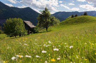 Landhof Irschen Natur©Gerdl Franz
