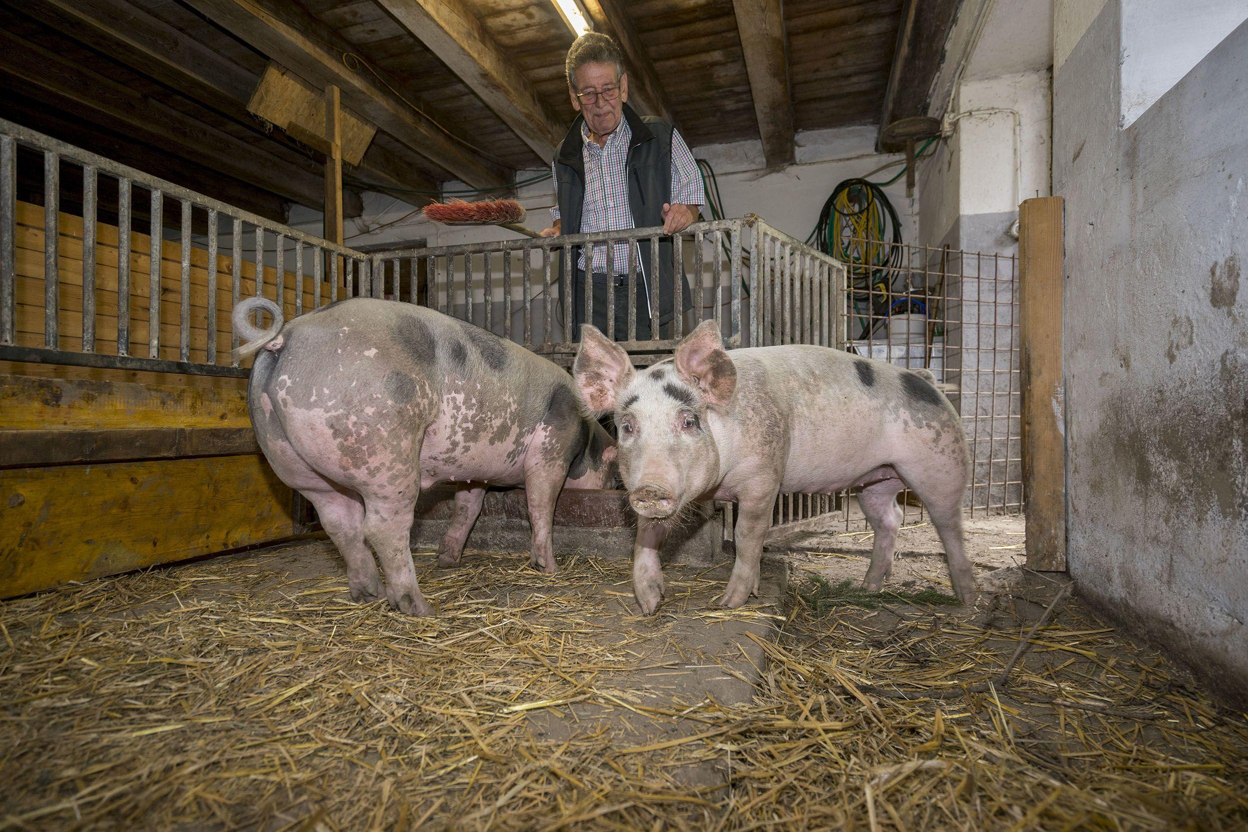 Bauernhof Kühnreit