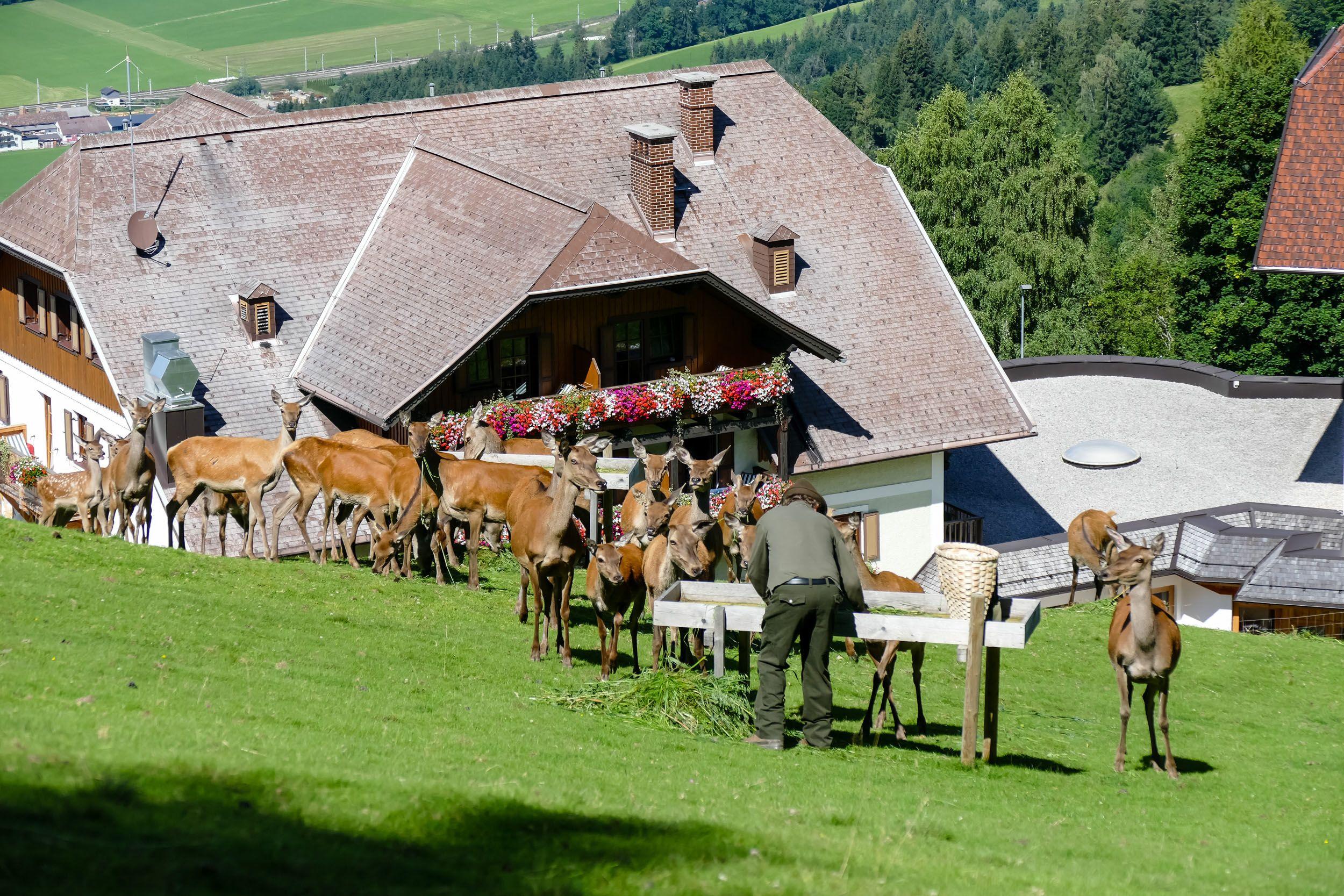 Reinhard Höflehner versorgt die Tiere im direkt hinter dem Hotel gelegenen Gehege.
