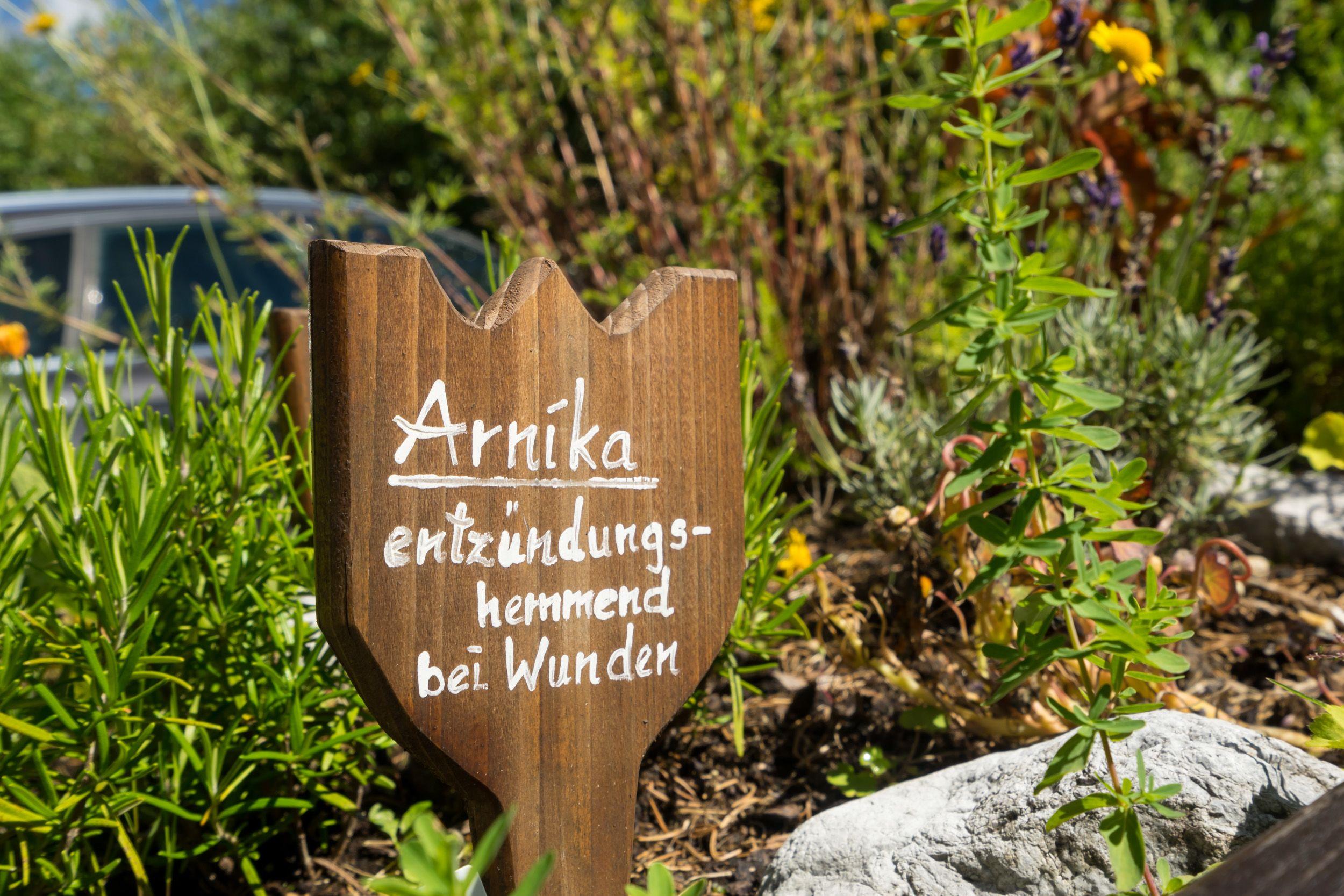 Arnika im Kräutergarten