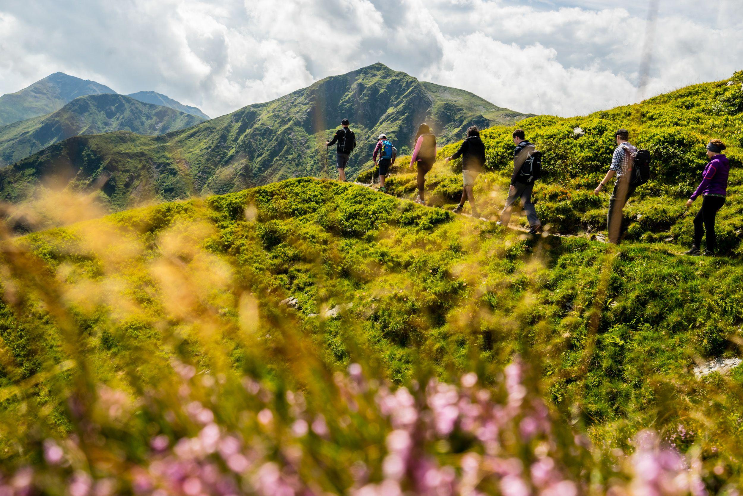 Wanderer am Zwölferkogel mit Blumen im Vordergrund