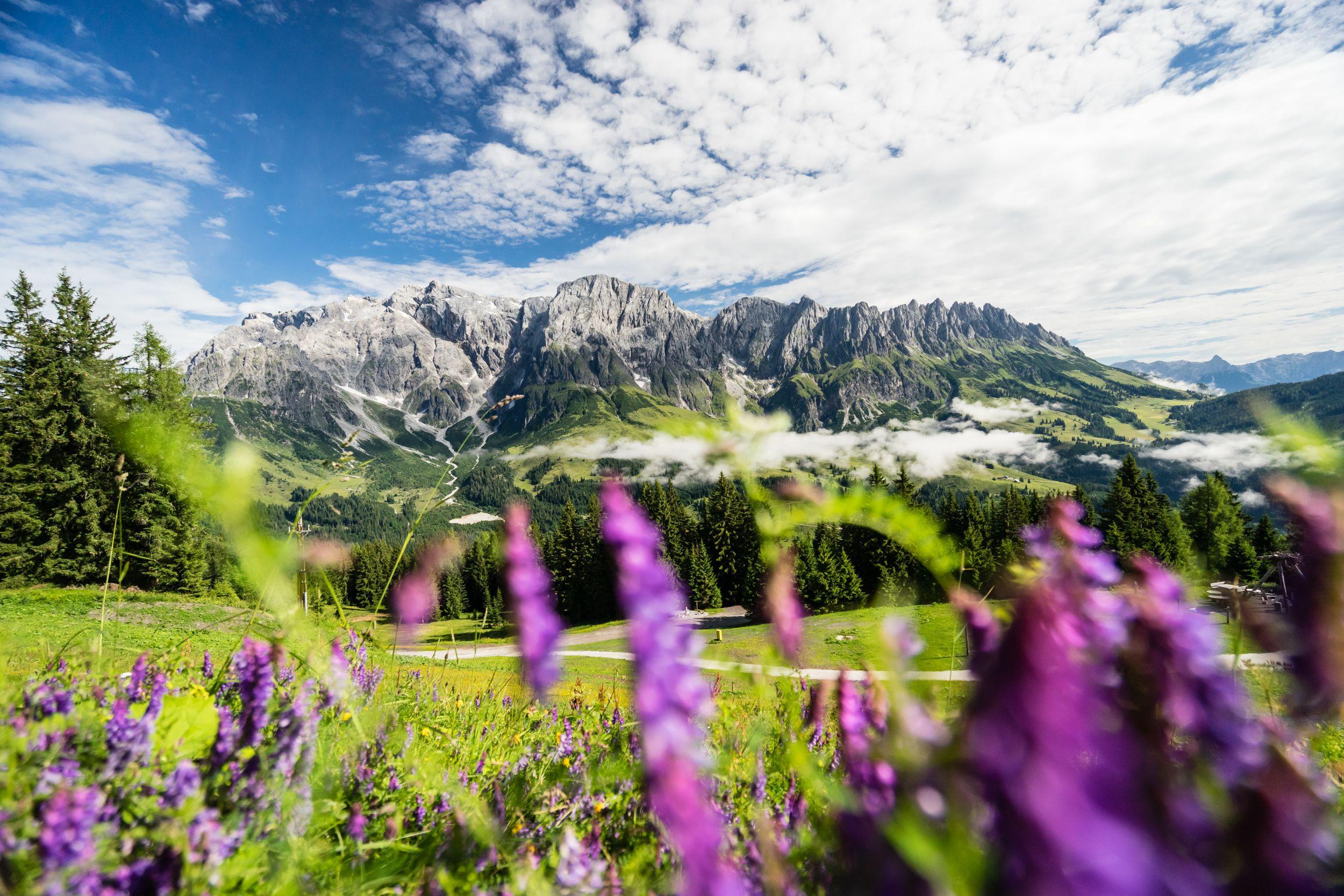 Wanderung zum Schneeberg