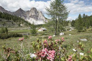 Excelsior Dolomites Life Resort Natur
