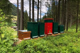 Jaufentalerhof Bienenstock