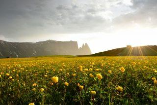 Artnatur Dolomites auf der Seiser Alm